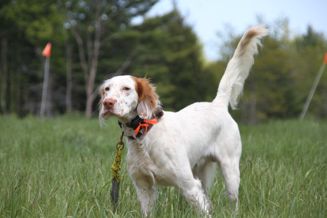 Gun Dog Trainer, Pat Perry